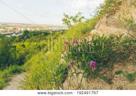 blooming flowers on the top of the hill with city on background