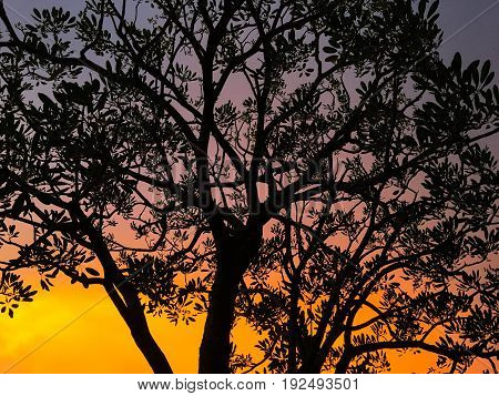 Sunset and silhouette trees with colorful light