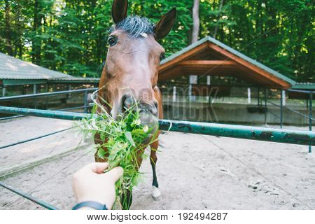 man feeds horse with grass, first person view