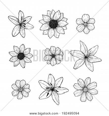 Hand Drawn Vector Illustration - Flowers Set. Floral Collection In Sketch Style. Perfect For Wedding