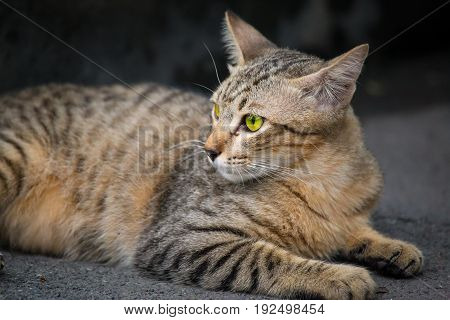 a moment of cat, cat in tiger pattern