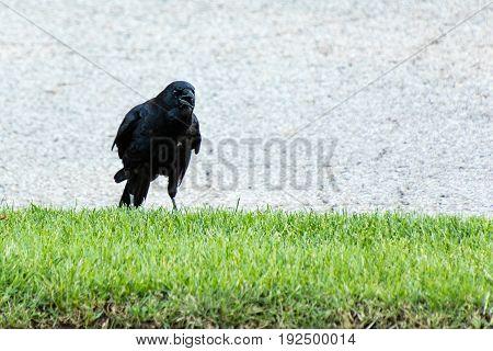a crow tell me that I was disturbing it
