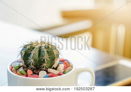Cactus decorated in a coffee shop coffee, image, details, wood, shop, pot, design, nature, green, decoration, closeup, flower, plant, decorative, style, garden, small, desert, blooming, beautiful, beauty, color, natural, concept, table, retro, light, cute