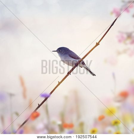 Blue-gray Gnatcatcher perched on a branch at sunset