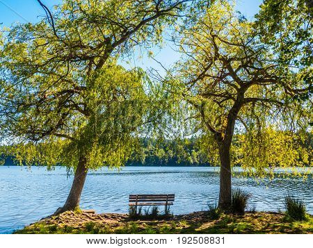 Bench overlooking a lake between two large trees