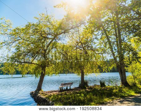 Bench overlooking a lake under the large trees sun flare above