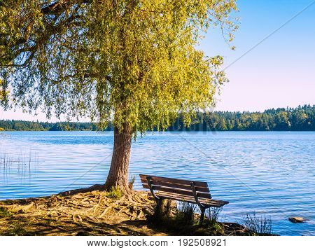 Bench overlooking a lake under the large tree