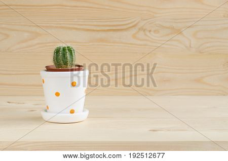 Small cactus in brown and ceramic white pot with orange dots over light color wooden table and background with space and sun light selective focus of green cactus