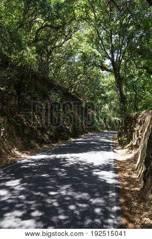 asphalt road in forest in summer day