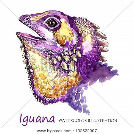 Watercolor Iguana on the white background. Exotic animal. Wildlife art illustration. Can be printed on T-shirts, bags, posters, invitations, cards, phone cases, pillows. Place for your text.