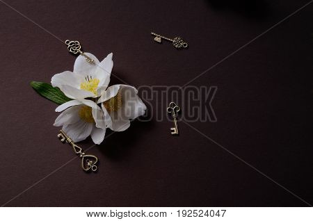 Creative top view layout with White Anemone flowers on a black background. Stylish minimalist background with first spring flowers.