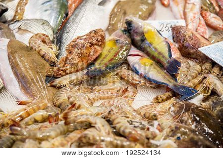 Mix of Fresh Seafood in Fresh Food Market - Catania Italy