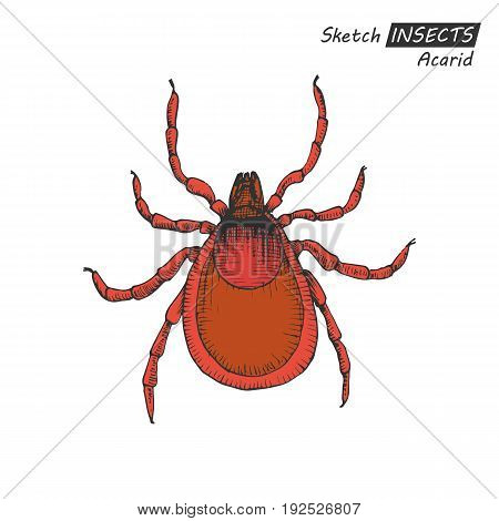 Hand drawn ink sketch of acarid isolated on white background. Vector illustration. Drawing in vintage style.