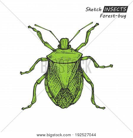 Hand drawn ink sketch of forest-bug isolated on white background. Vector illustration. Drawing in vintage style.