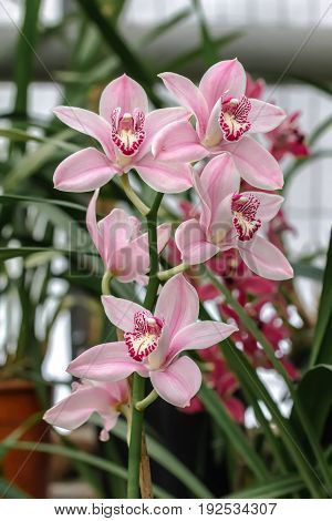 Beautiful and colorful orchid flowers in the garden