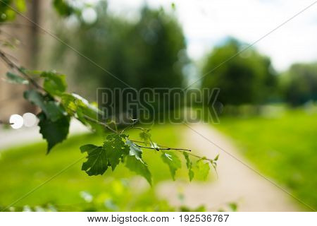 Summer tree branch in park city background hd
