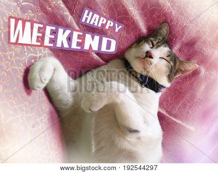 Cute cat sleeping and happy weekend word