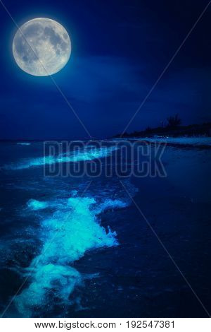 Tropical beach at night with a brigh full moon
