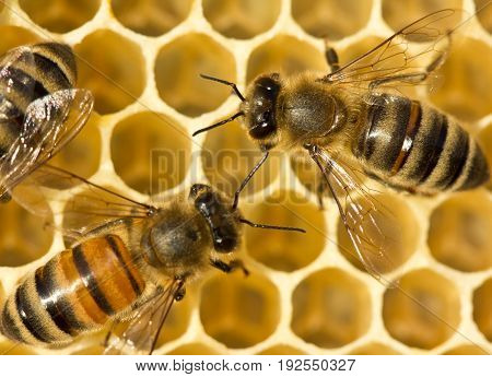 Bees build honeycombs. They work in a team.