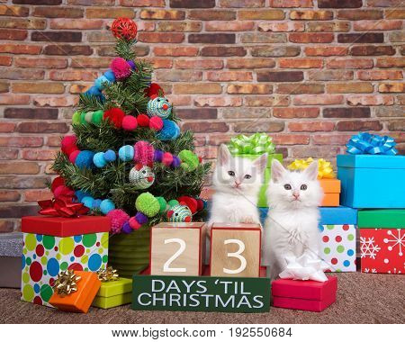Two fluffy white kittens sitting on brown carpet next to small christmas tree with yarn ball and toy mice decorations. Colorful presents with bows and countdown to Xmas blocks. 23 days til.