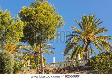Landscape tree tops of pine trees and palm trees on mediterranean sea in Majorca in Spain against blue sky.