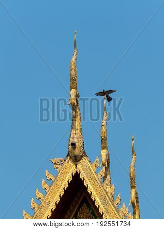 Pigeon winged on top of gold temple roof on blue sky background