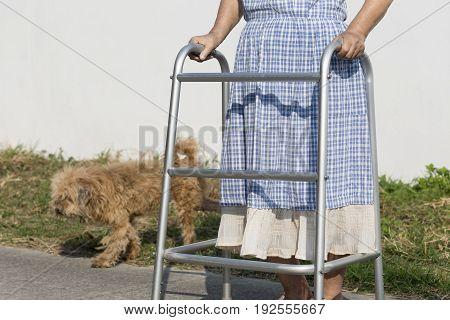 senior woman using a walker cross street with dog