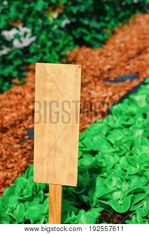 Empty wooden sign in the garden with green, brown line.