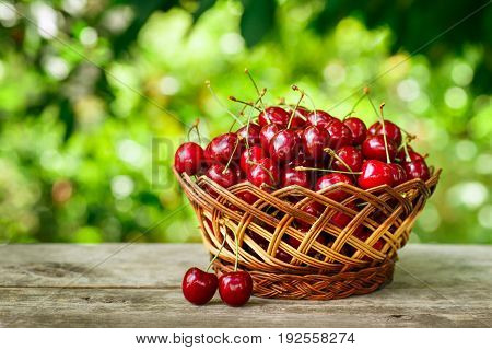 cherry basket. Ripe cherries in wicker basket on wooden table with blurred green garden on the background. Gardening and harvest concept. Healthy summer fruit