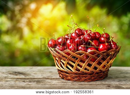 cherry basket. Ripe cherries in wicker basket on wooden table with with sunshine blurred natural background. Gardening and harvest concept. Healthy summer food