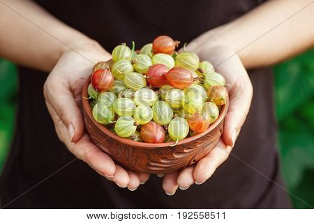 closeup gooseberries in bowl at female hands. Gardening, agriculture, harvest concept. Hands holding bowl with fresh ripe gooseberries. Harvest of summer berries