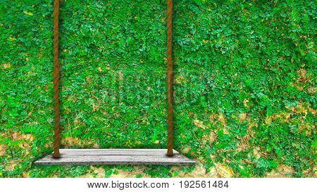 Wooden swing with green small plant on cement wall background use for product display