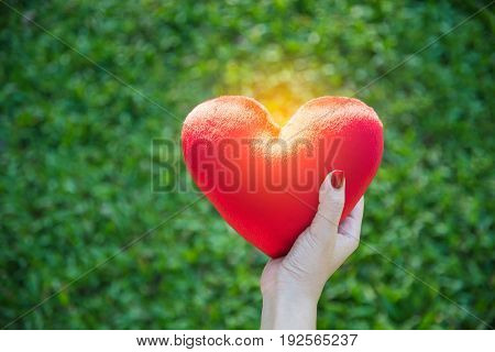 Red soft heart small pillow shape in asian female hand for Valentines day concept on green grass background with soft yellow sunlight and copy space selective focus