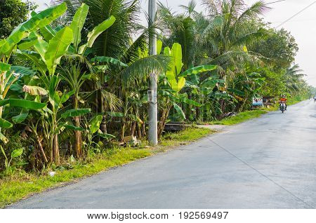 Palm Trees Grow Along The Road