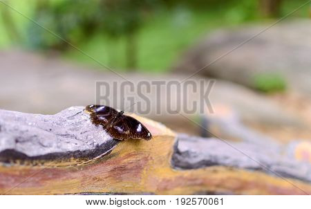 Black butterfly on wooden branch in a park