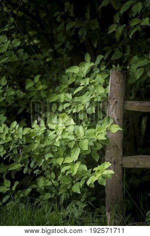 Beautiful Artistic Sunlit Wooden Fence Post In Lush English Countryside Landscape