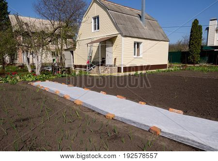 Voronezh, Russia - April 30, 2017: Use of covering material to protect the soil in the garden area