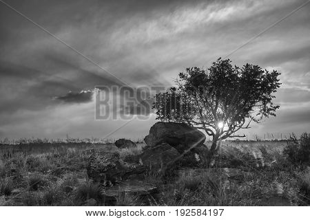 Landscape of tree on a hill with clouds at sunset artistic conversion