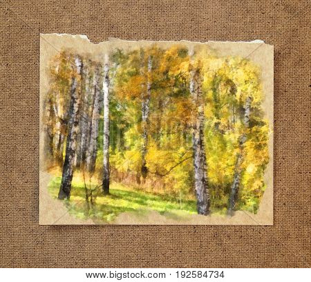 Tall slender white birch trunks in a golden dress. Russian autumn watercolor landscape on paper with a torn edge in the passepartout