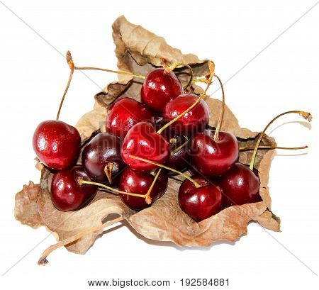 Ripe Sweet Cherry Berries On A Curled Dried Leaf With Shadow Isolated