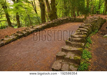 A pathway over a bridge at Barna Woods Co. Galway.