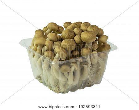Pack of raw mushroom in white bright background
