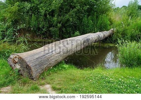 Tree trunk tree crossing a small river in a Dutch forrest,