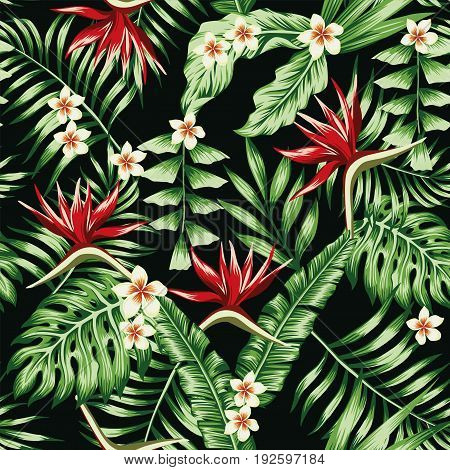 Tropical plants leaves and flowers of the frangipani plumeria and the bird of paradise. Seamless beach pattern on black background wallpaper