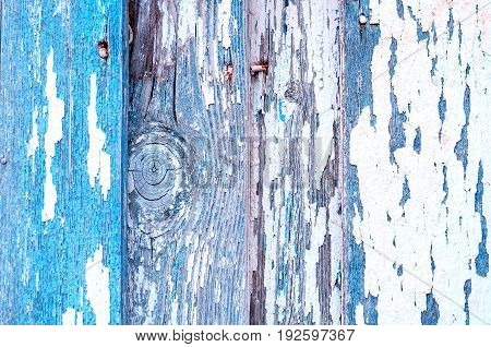Texture wooden background with blue peeling paint. Peeling paint texture. Texture background of blue texture peeling paint on the wooden texture surface. Texture of blue peeling paint on the wooden texture background. Grunge texture surface