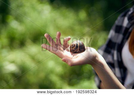 Snail on hand, grass, garden, summer, season, light.