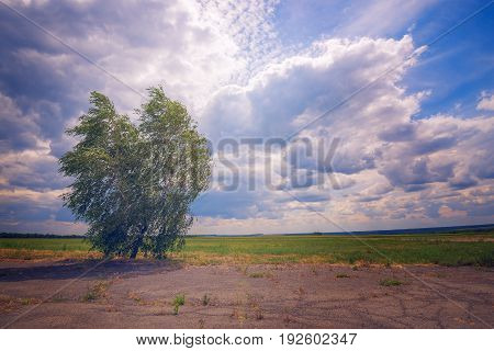 Tree Grows On An Abandoned Aerodrome