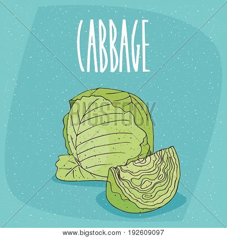 Isolated Ripe Green Cabbage Vegetable