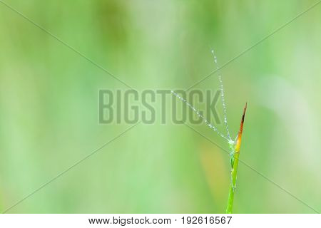 this green grasshopper poses for the picture in close up
