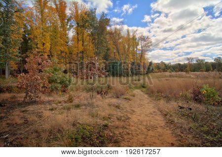 A sandy trail at Oak Openings Preserve Metropark in Toledo Ohio. Part of a large oak savana region in the area.